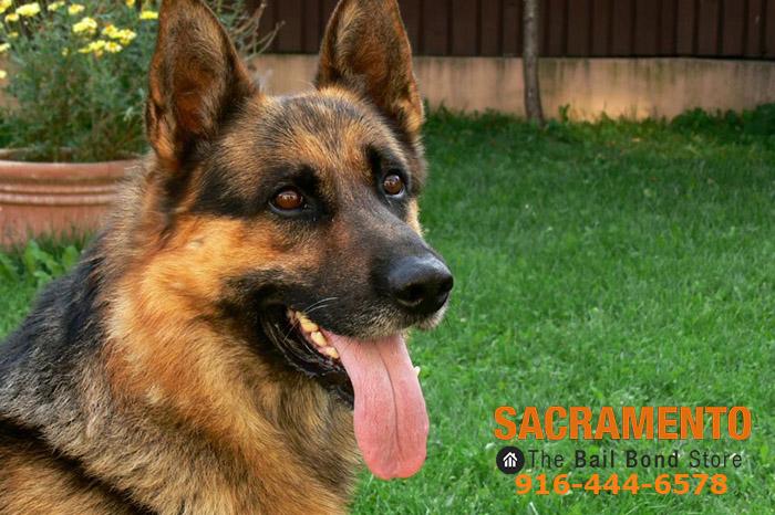 Sacramento bail bonds Animal scams