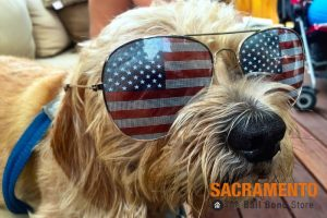 Prepare Your Pets for Fireworks